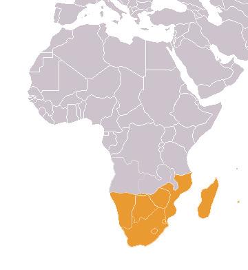 Страны тропической африки